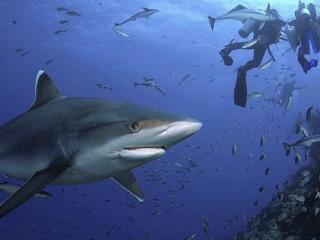 Dive Into Fiji